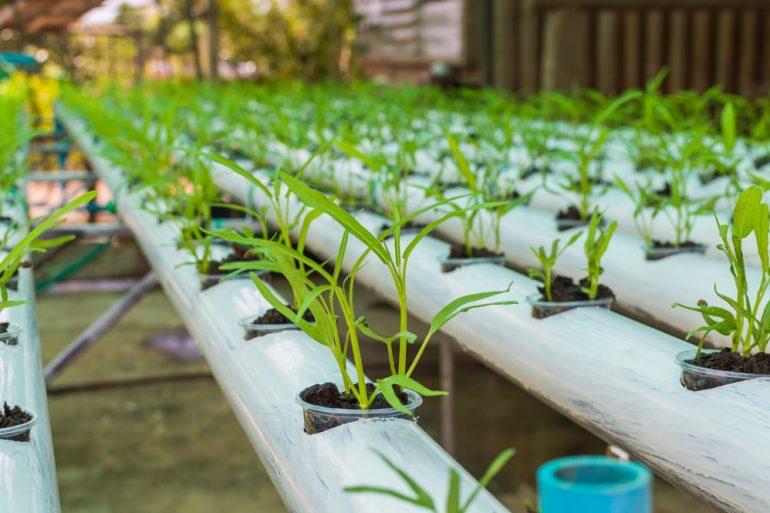 Akcesoria do uprawy hydroponicznej – przewodnik