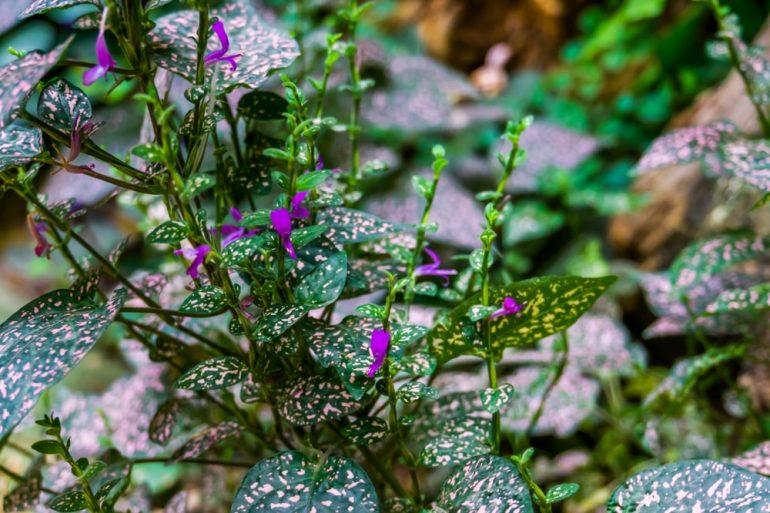 Hydroponiczna uprawa roslin doniczkowych – na czym polega
