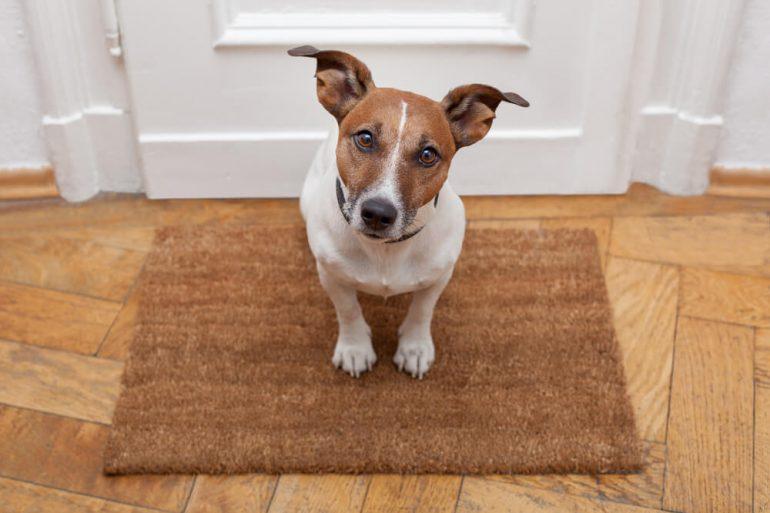 Jak przygotowac psa na pojawienie sie w domu kota – poradnik 2