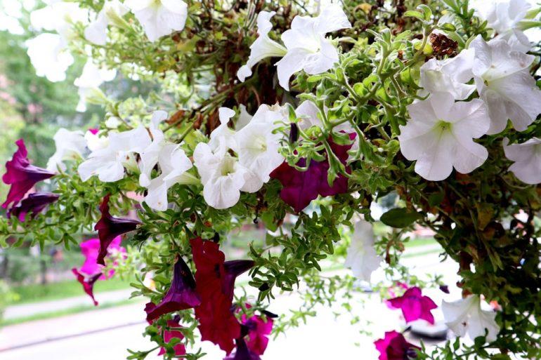 Kwiaty do ciemnego mieszkania